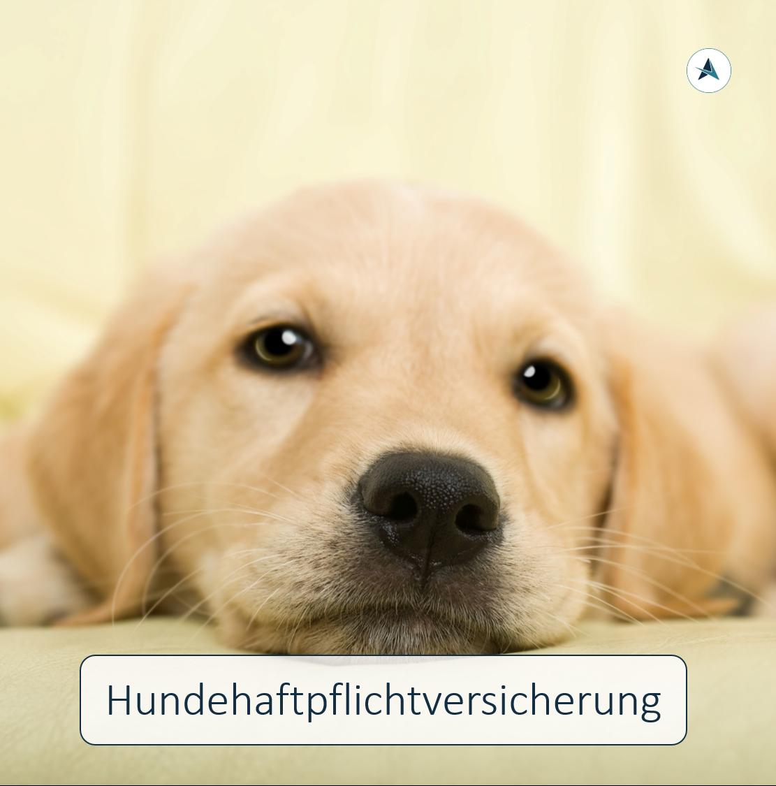 Versicherungsmakler-Berlin-Hundehaftpflichtversicherung-André-Böttcher-Tierversicherung-Hund