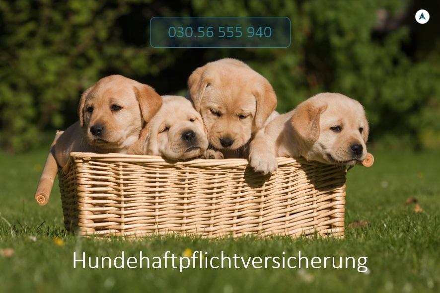 Hundehaftpflichtversicherung-Versicherungsmakler-Berlin-André-Böttcher-Hundeversicherung-Haftpflicht